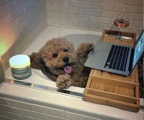 собака в ванне