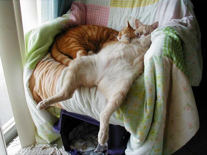коты спят в кресле