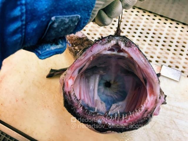 glubin-morskih-chudischa-eto-interesno-poznavatelno-kartinki