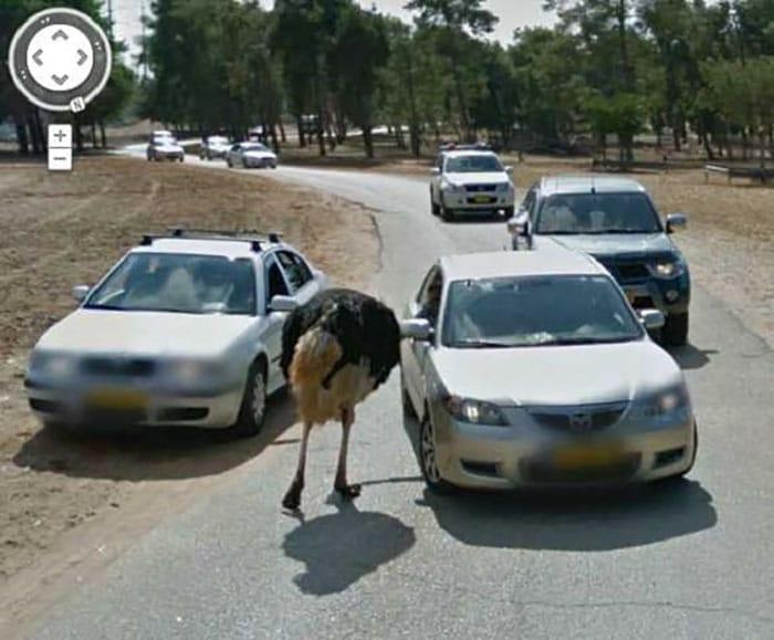 google-street-animals-44-5d2445b3f24bf__700.jpg
