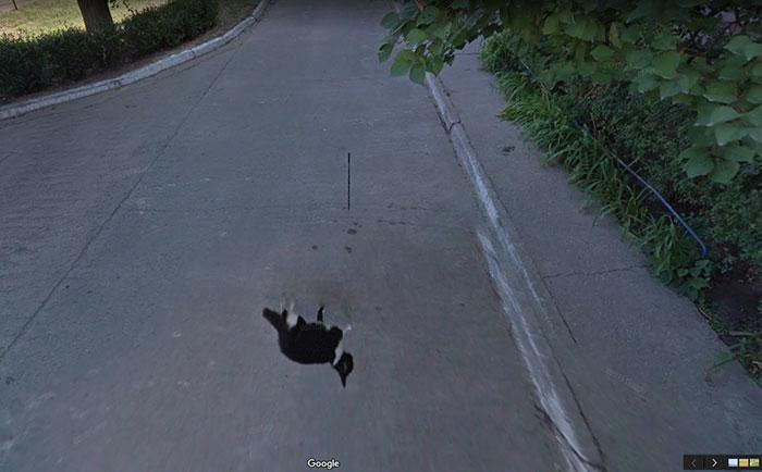 google-street-animals-59-5d244d0371737__700.jpg