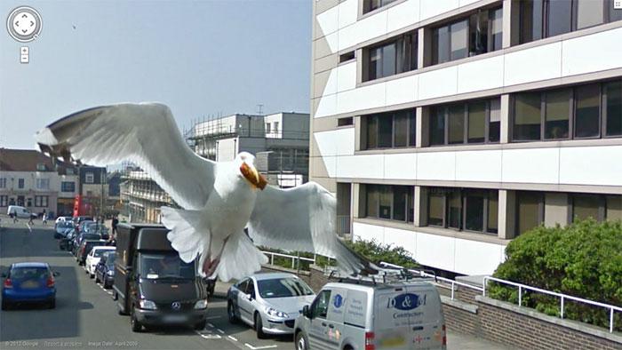 google-street-animals-5d2441d08ec01__700.jpg