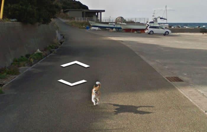 google-street-animals-5d2441deb859b__700.jpg