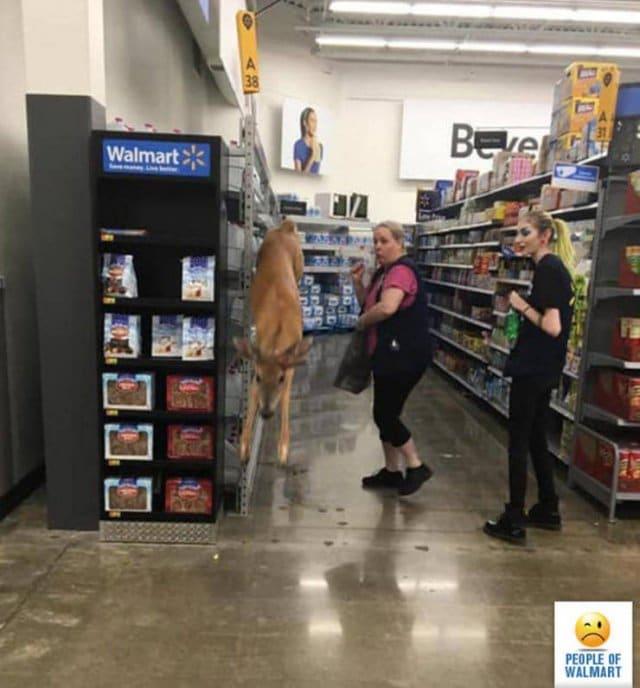 олень в супермаркете