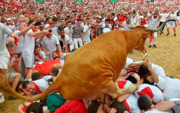 бык в толпе людей
