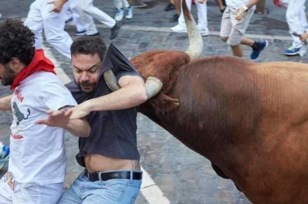 бык напал на парня
