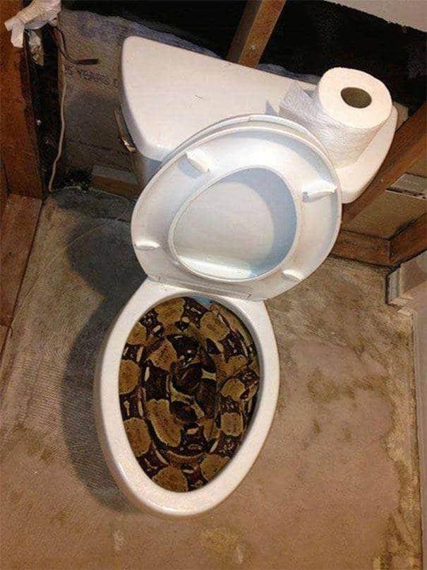 змея в унитазе
