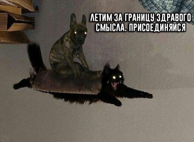 смешная картинка