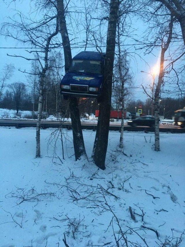машина между деревьями