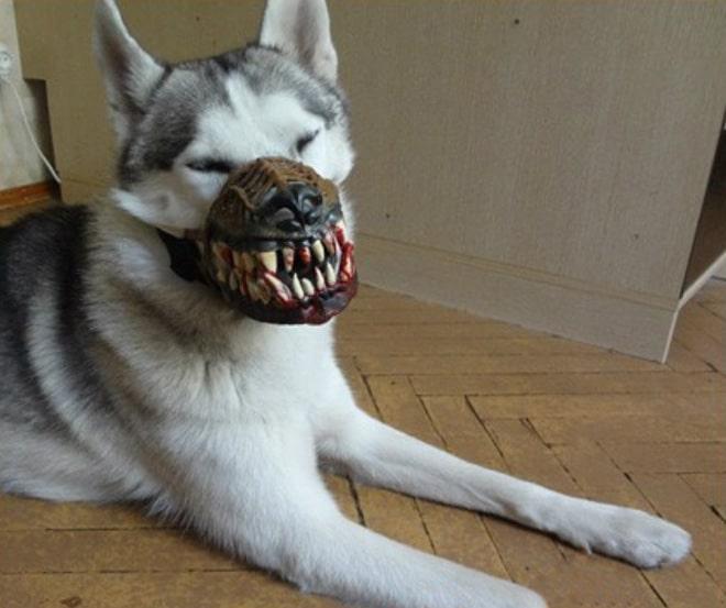 пес в наморднике