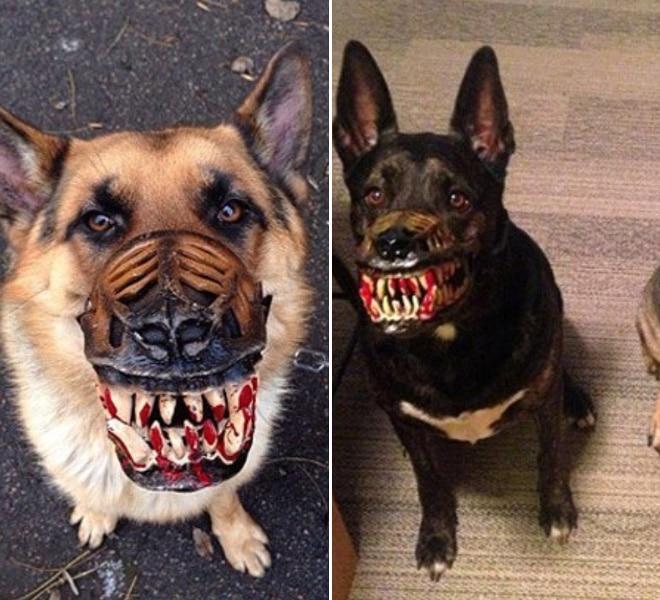 собаки сидят в намордниках