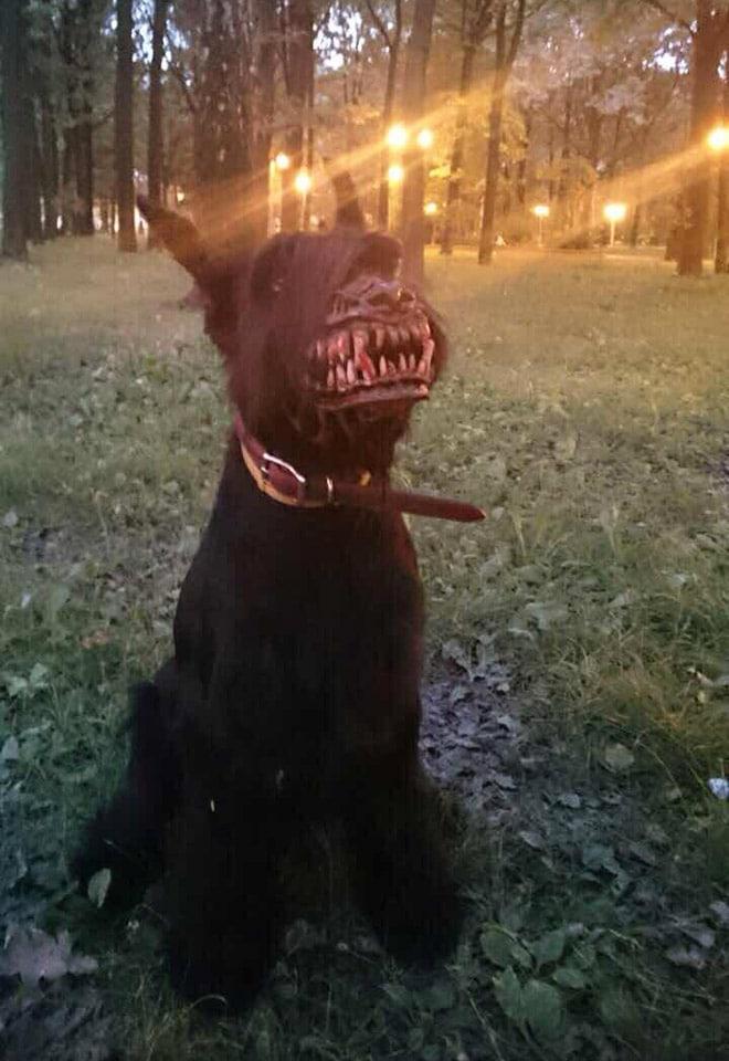 собака в наморднике в лесу