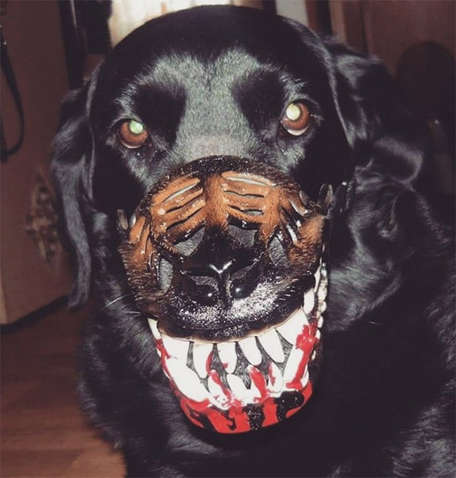 черный пес в наморднике