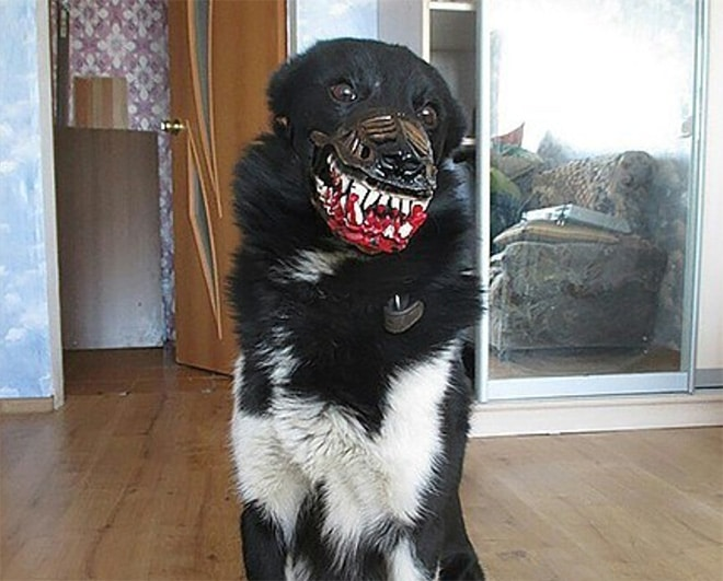 черная собака в наморднике