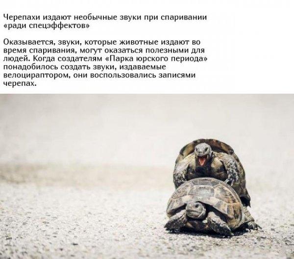 zhivotnyh-mire-ritualy-eto-interesno-poznavatelno-kartinki_6234904027-1