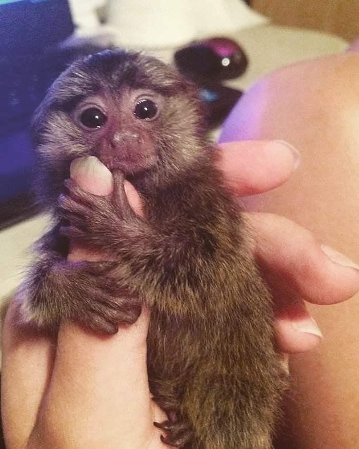 обезьянка на руках