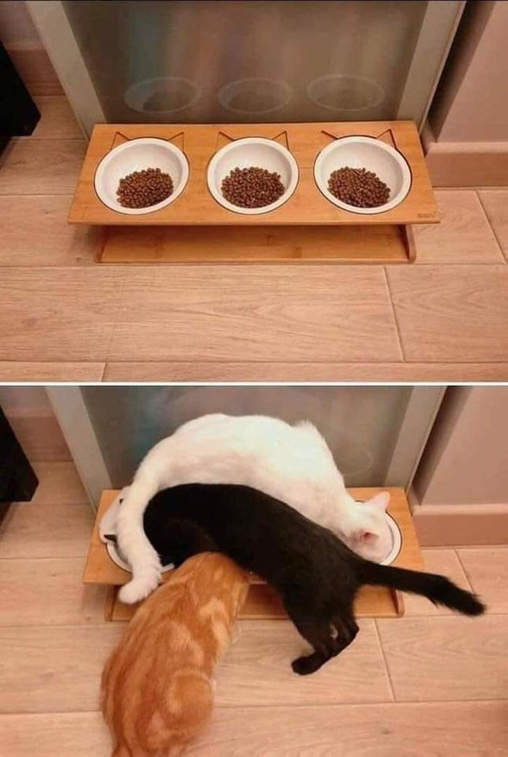 коты едят корм