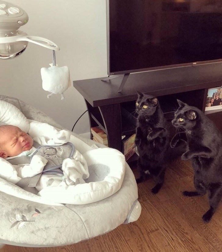 два черных кота и новорожденный