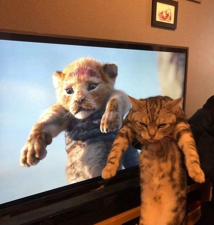 кот на фоне телевизора