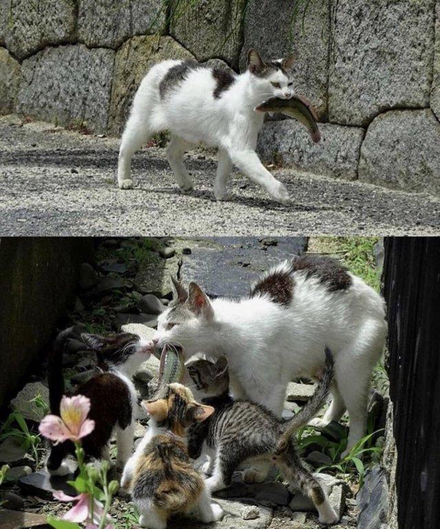 мама-кошка и её котята