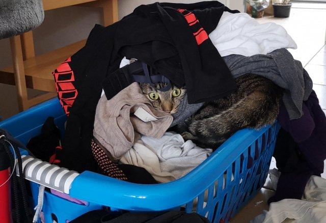 кот в грязном белье