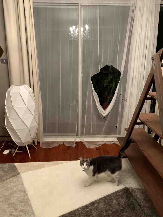 кот порвал штору