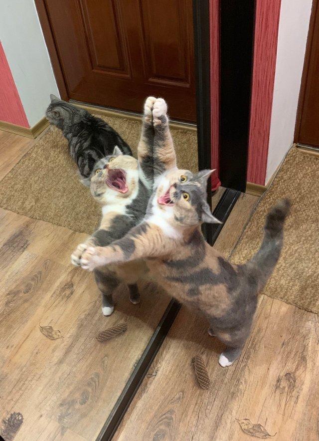 кот играет с зеркалом