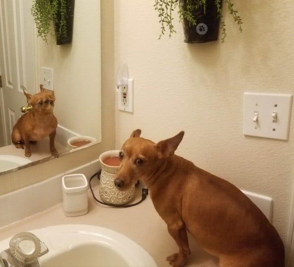 пес и зеркало