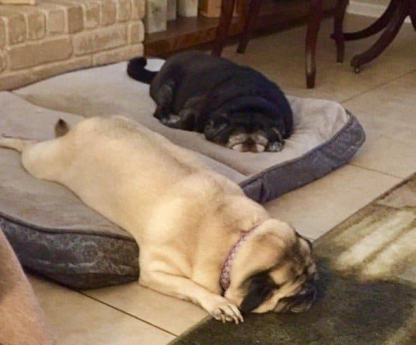 спящие псы