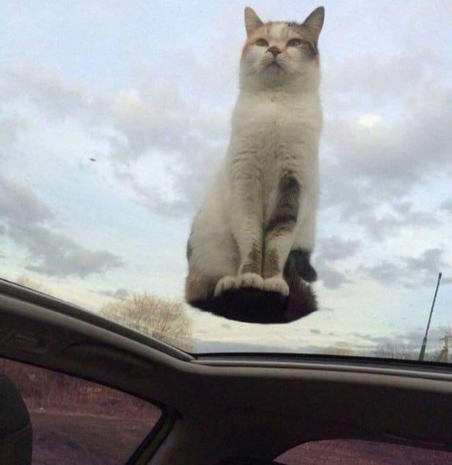 кот на стекле