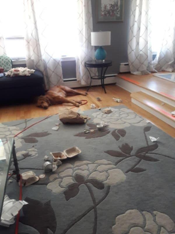 вредный пес