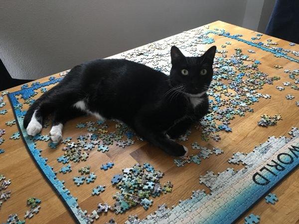кот и мозаика