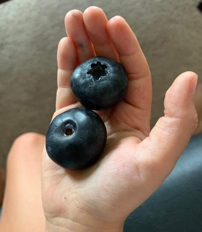 две ягоды черники в ладони