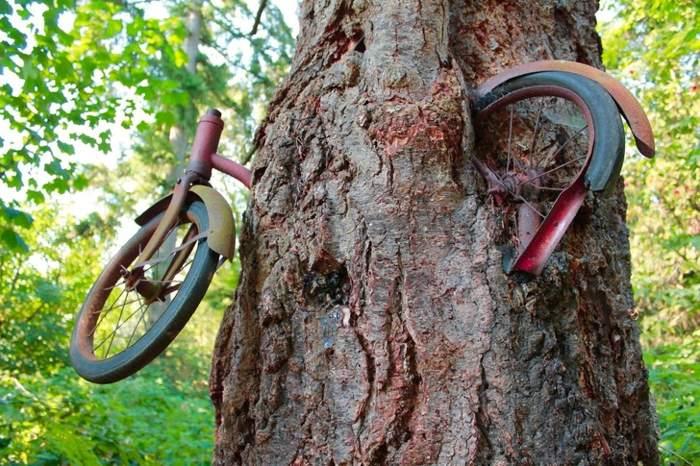 велосипед на дереве