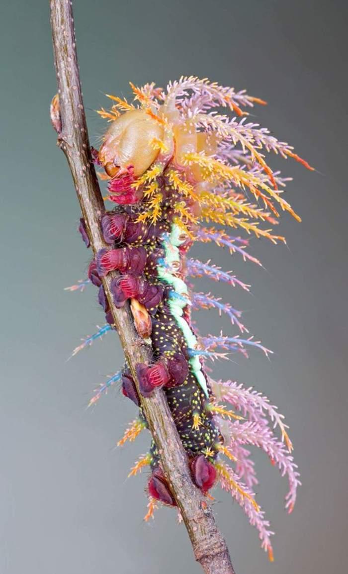 гусеница на ветке