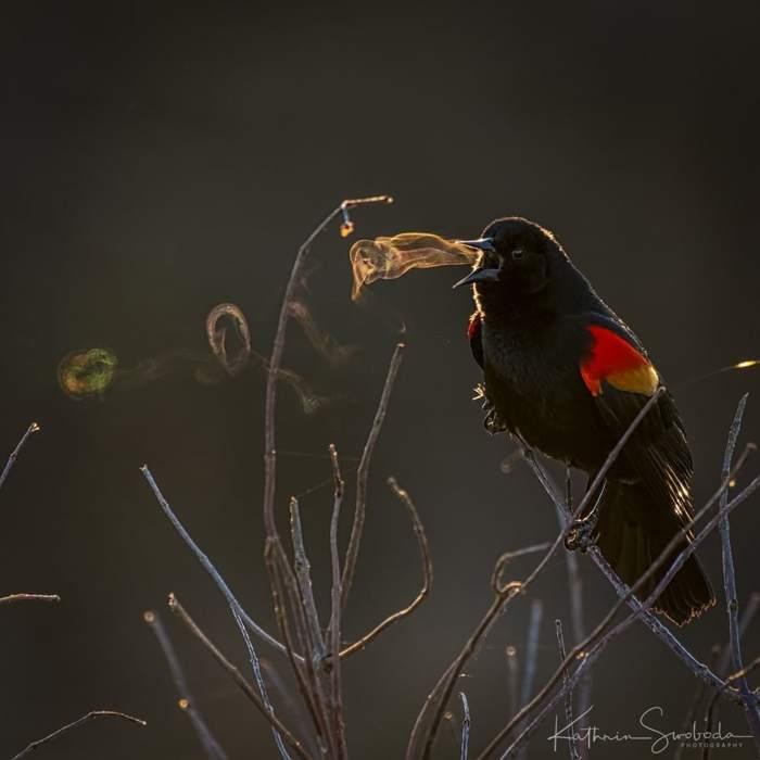 птичка поет, сидя на ветке