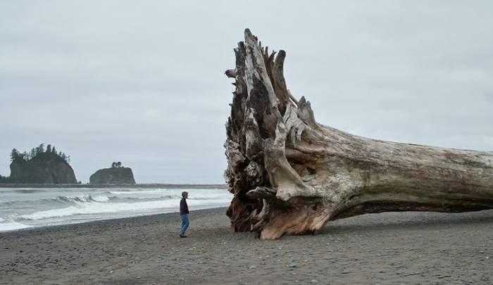 дерево упало на пляже