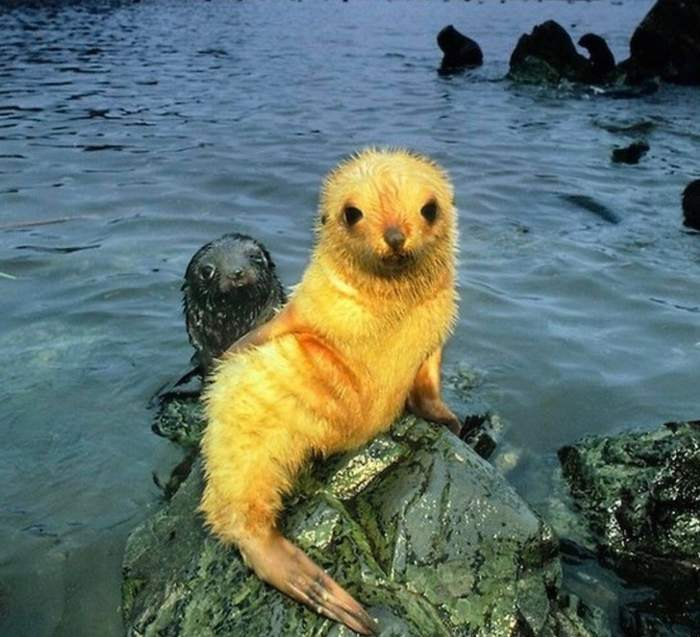 детеныши тюленя в воде