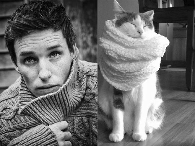 эдди редмейн и кот в шарфе