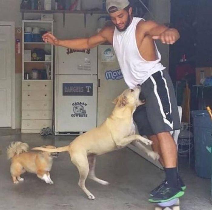 мужчина и собаки