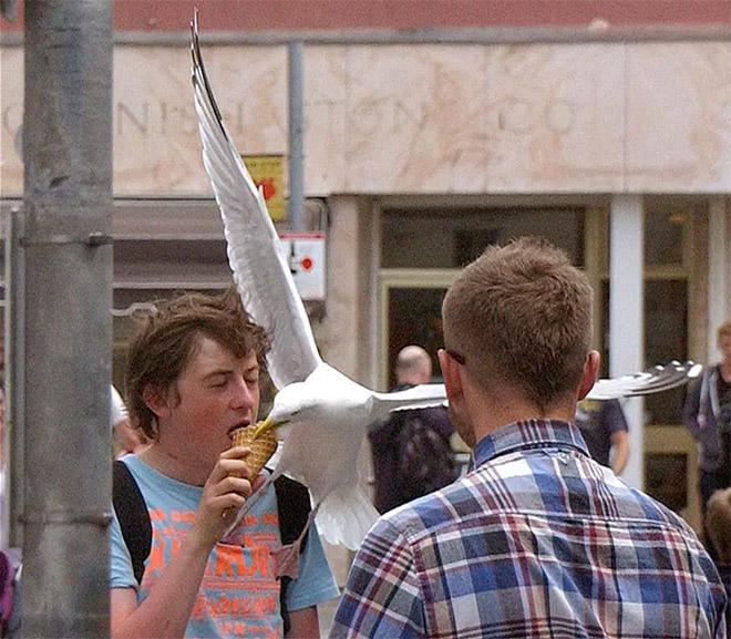 чайка ест мороженое с парнем