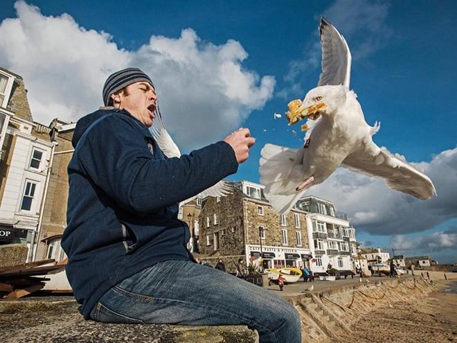 чайка украла у мужчины еду