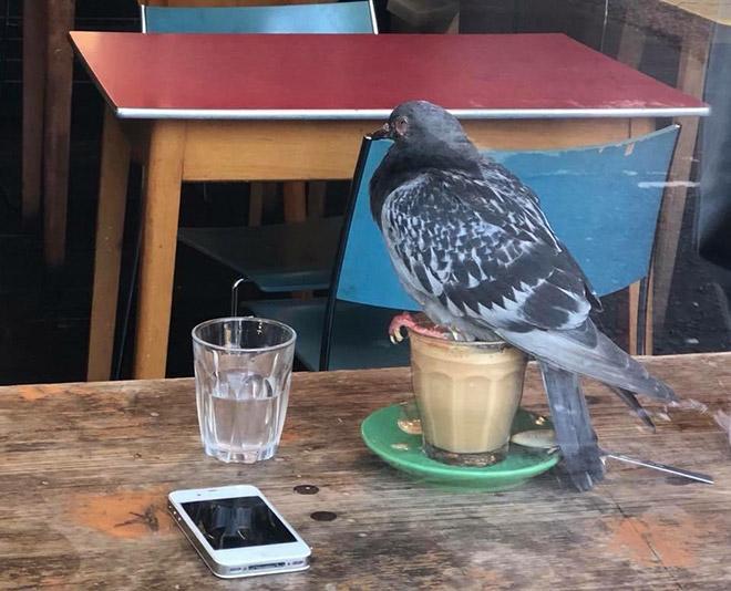 голубь сидит на стакане с кофе