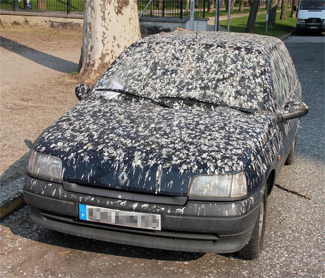 машина в голубином помете