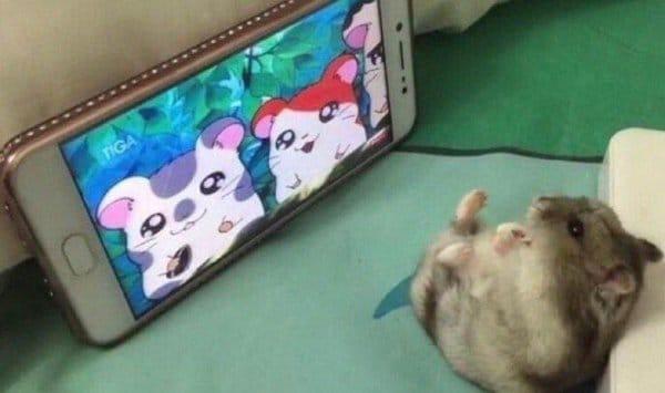 хомяк смотрит мультфильм