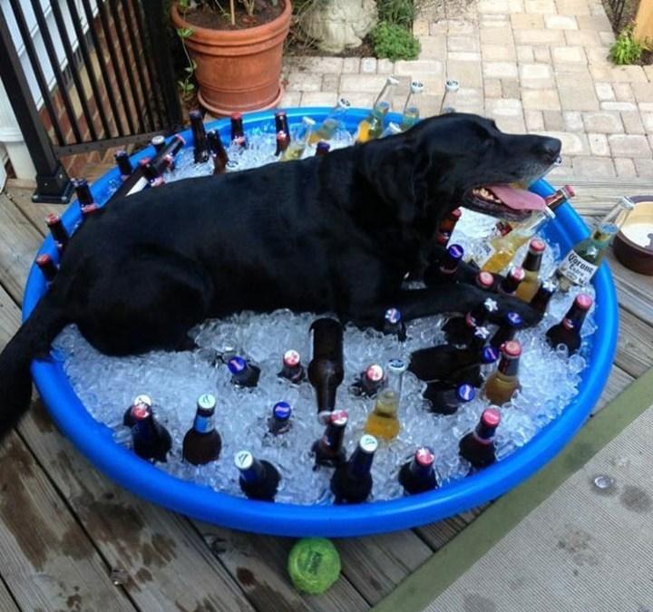 собака в тазе со льдом и пивом