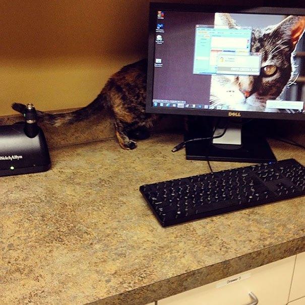 кот за монитором
