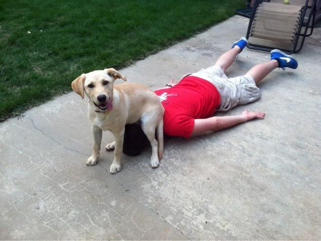 собака сидит на голове у парня