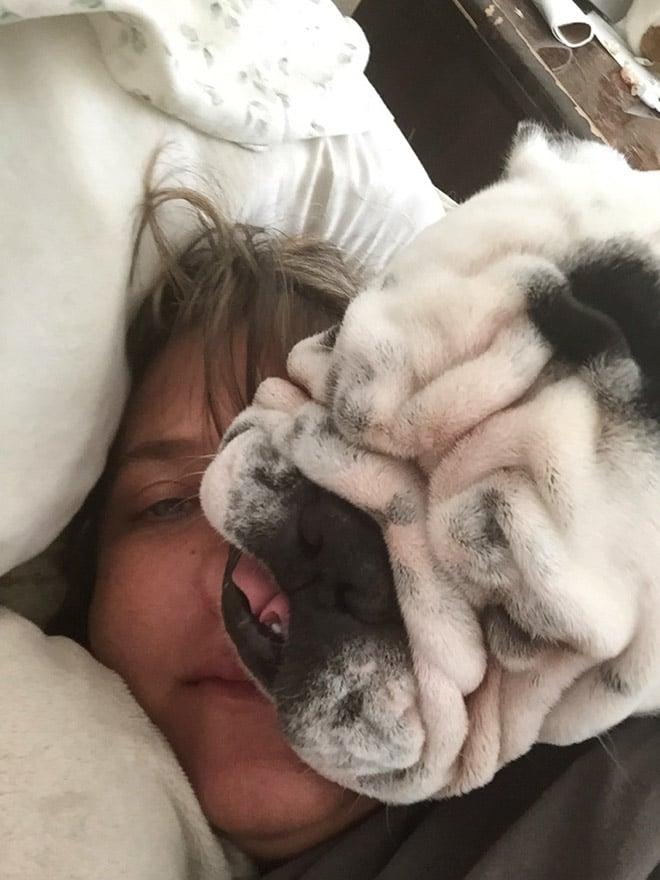 собака лежит на лице у женщины