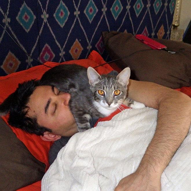 серая кошка сидит на спящем мужчине